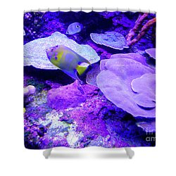 Shower Curtain featuring the photograph Ta Purple Coral And Fish by Francesca Mackenney