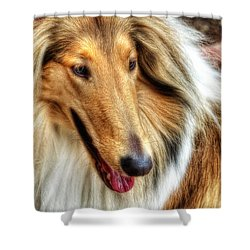 Taffy Collie Shower Curtain