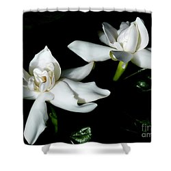 Tahitian Gardenia Shower Curtain by Amar Sheow