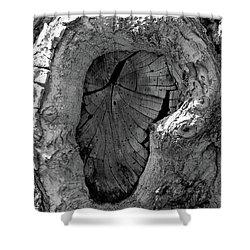 Shower Curtain featuring the photograph Tahoe Abstract Bark by LeeAnn McLaneGoetz McLaneGoetzStudioLLCcom