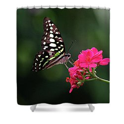 Tailed Jay Butterfly -graphium Agamemnon- On Pink Flower Shower Curtain