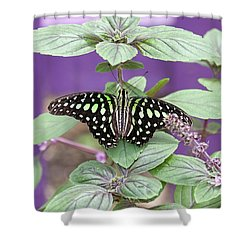 Tailed Jay Butterfly In Puple Shower Curtain