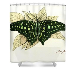 Tailed Jay Butterfly Shower Curtain
