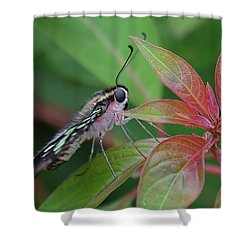 Tailed Jay Butterfly Macro Shot Shower Curtain
