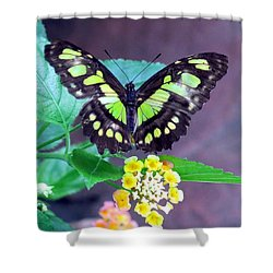 Tailed Jay Visits Lantana Shower Curtain by Betty Buller Whitehead