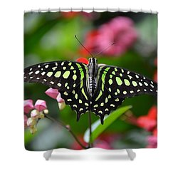 Tailed Jay4 Shower Curtain by Ronda Ryan