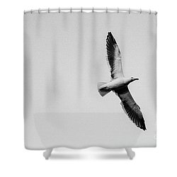 Take Flight, Black And White Shower Curtain