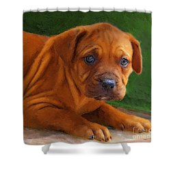 Shower Curtain featuring the photograph Take Me Home by John  Kolenberg