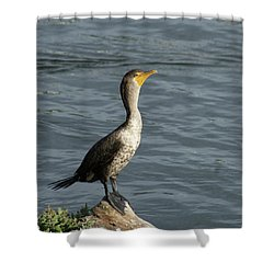 Take My Picture - Cormorant Shower Curtain