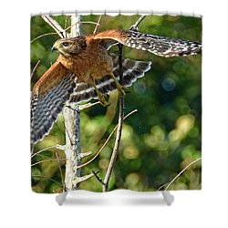 Take Off Shower Curtain by Don Durfee