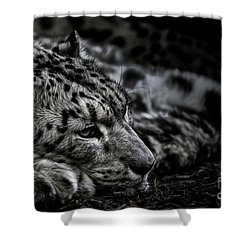 Taking A Break Shower Curtain by Brad Allen Fine Art