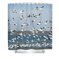 Taking Flight IIi Shower Curtain