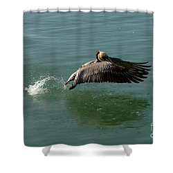 Shower Curtain featuring the photograph Taking Flight by Rod Wiens