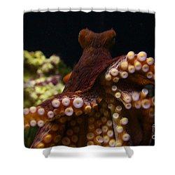 Tako Not Taco Hawaiian Octopus Shower Curtain