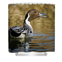 Talking Pintail Shower Curtain