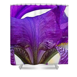 Tall, Bearded And Handsome - Iris Shower Curtain