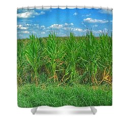 Tall Corn Shower Curtain by Jame Hayes