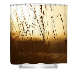 Tall Grass In The Morning Shower Curtain