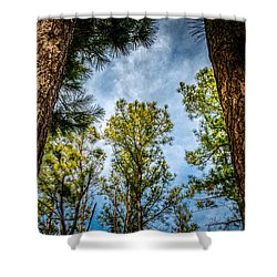 Tall Pines Shower Curtain
