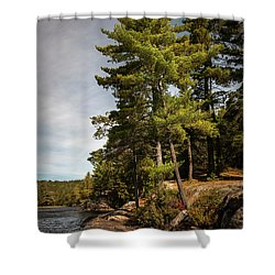 Shower Curtain featuring the photograph Tall Pines On Lake Shore by Elena Elisseeva