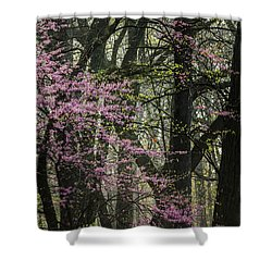 Tall Red Buds In Spring Shower Curtain by Joni Eskridge