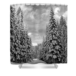 Tall Snowy Trees Shower Curtain by Lynn Hopwood
