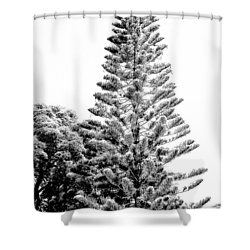 Tall Tree Bw - Lan11 Shower Curtain by G L Sarti