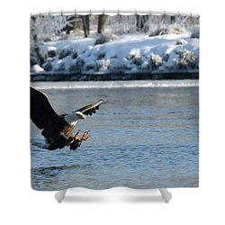 Talons Out Shower Curtain by Brook Burling