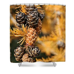 Tamarack Larch Tree In The Fall  Shower Curtain