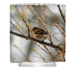 Tamarack Visitor Shower Curtain