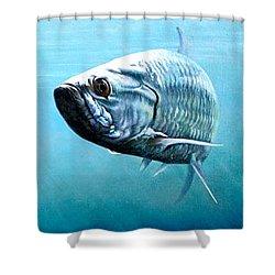 Tampa Bay Tarpon Shower Curtain by Joan Garcia