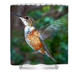 Tan Hummingbird Shower Curtain by Joseph Frank Baraba
