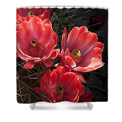 Tangerine Cactus Flower Shower Curtain by Phyllis Denton