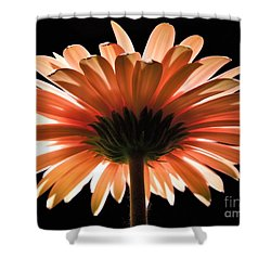 Tangerine Gerber Daisy Shower Curtain