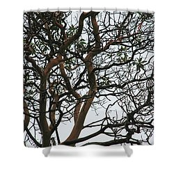Tangled Web Tree Shower Curtain by Carol  Eliassen