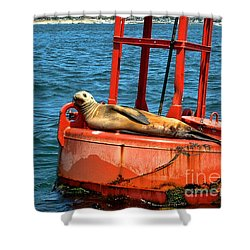 Shower Curtain featuring the photograph Tanning Sea Lion On Buoy by Mariola Bitner