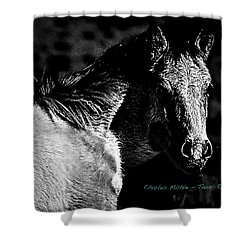 Taos Pony In B-w Shower Curtain