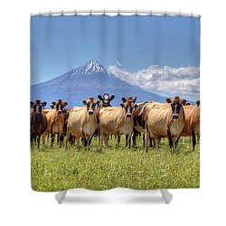 Taranaki Cows Shower Curtain