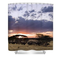 Tarangire Sunset Shower Curtain by Adam Romanowicz