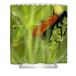 Tarantula Hawk 1 Shower Curtain