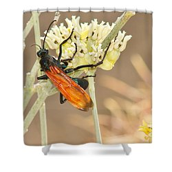 Tarantula Hawk Shower Curtain