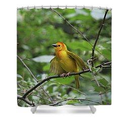 Taveta Golden Weaver #3 Shower Curtain