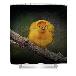 Taveta Golden Weaver  Shower Curtain
