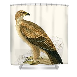 Tawny Eagle Shower Curtain by English School
