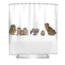 Tawny Owl Family Shower Curtain