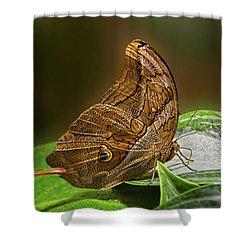 Tawny Owl Shower Curtain by Ronda Ryan