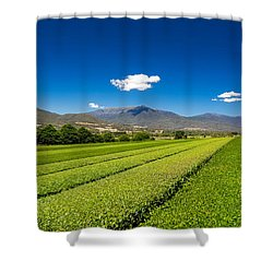 Tea In The Valley Shower Curtain by Mark Lucey