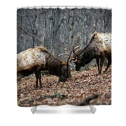 Shower Curtain featuring the photograph Teaching by Andrea Silies