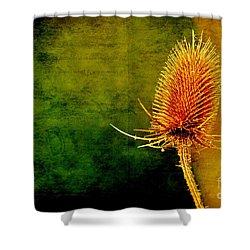 Shower Curtain featuring the photograph Teasel Head by Dariusz Gudowicz