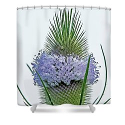 Teasel On White Shower Curtain
